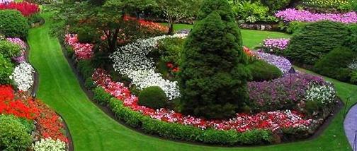Remi Lima Construção e Manutenção De Jardins
